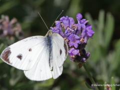 Fauna8-IMG_0555b