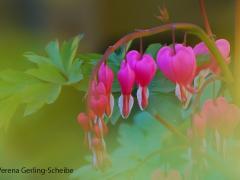 Flora10-DSC_0552