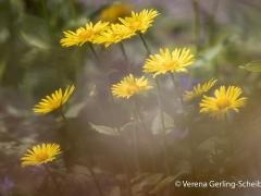 Flora13-IMG_6457