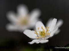Flora15-IMG_9978