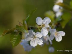 Flora16-IMG_9198