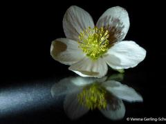 Flora4-2013_1696