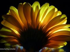 Flora5-2013_1728