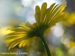 Flora6-DSC_1916