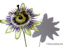 Flora7-DSC_0178
