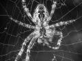 Spinnen von unten