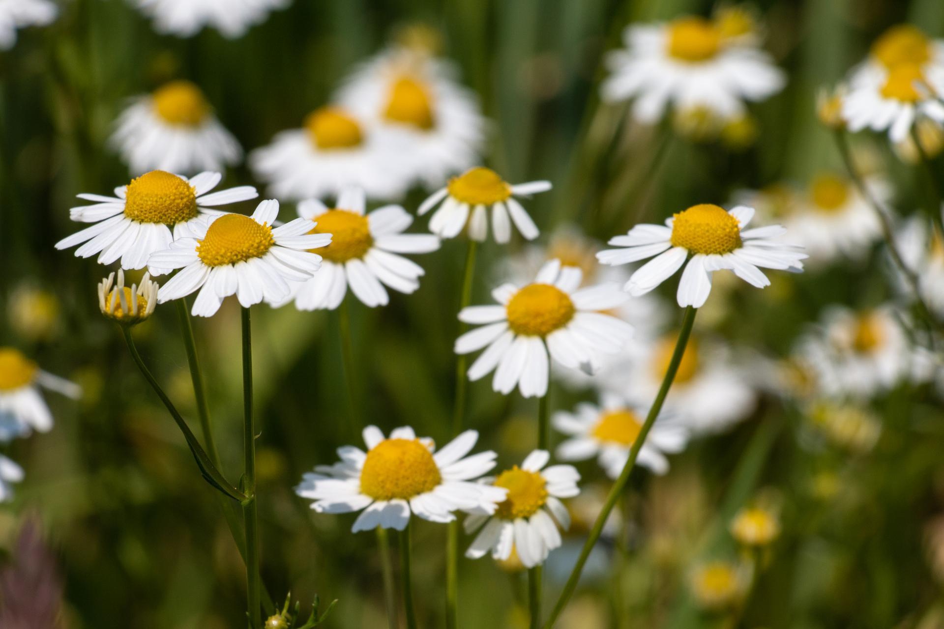 Sommer, Sonne, Blumenschein II