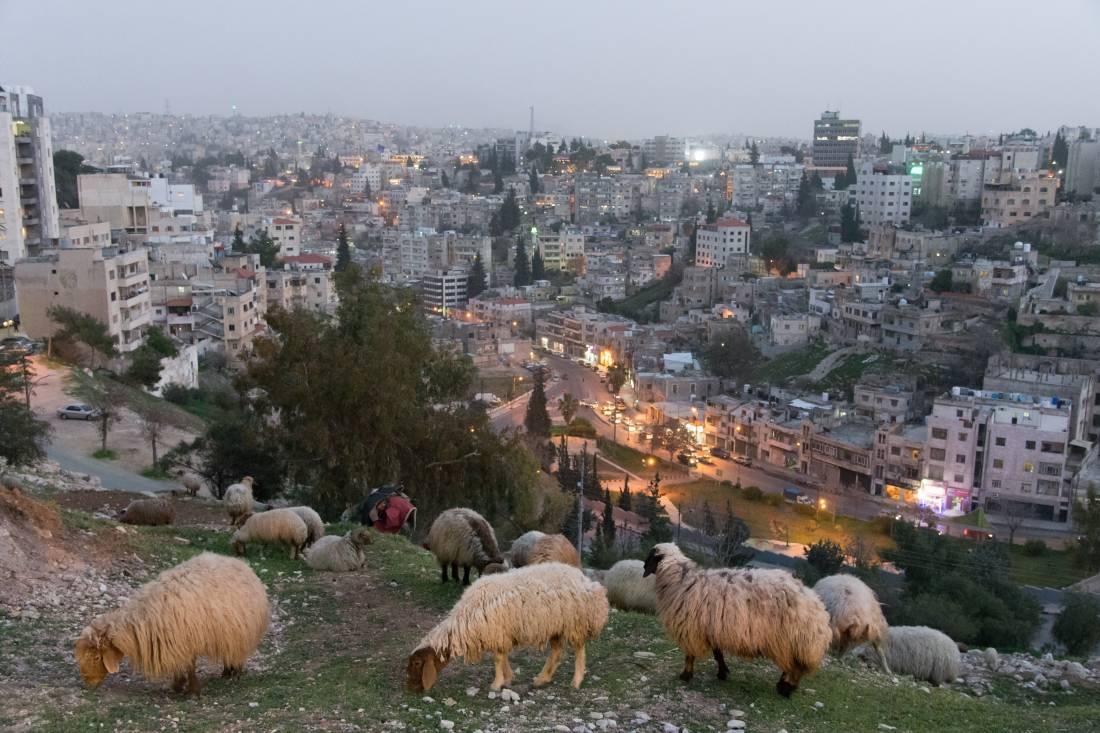 20170311 Amman, Schafe und 4 Mio. Menschen