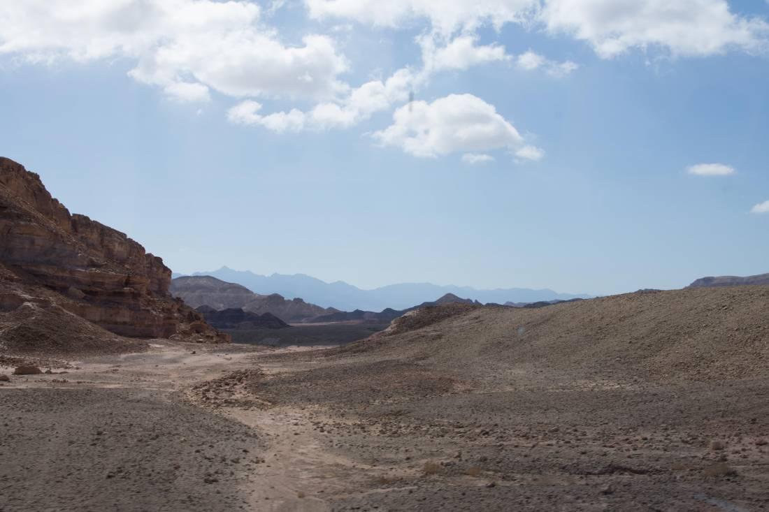 20170316 Die Wüste lebt
