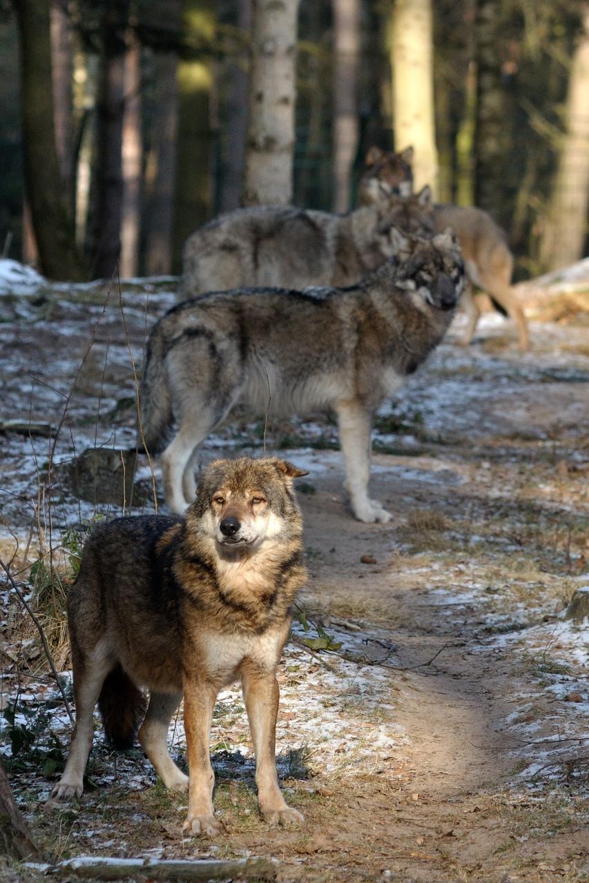 Wolfscenter Doerverden
