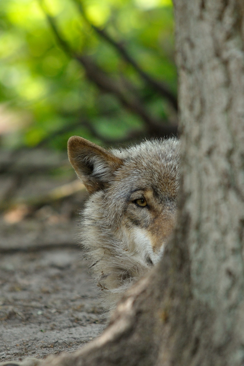 wolfscenter Doerverden (5)