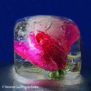 1-VGS-Wasser-c-DSC_0574