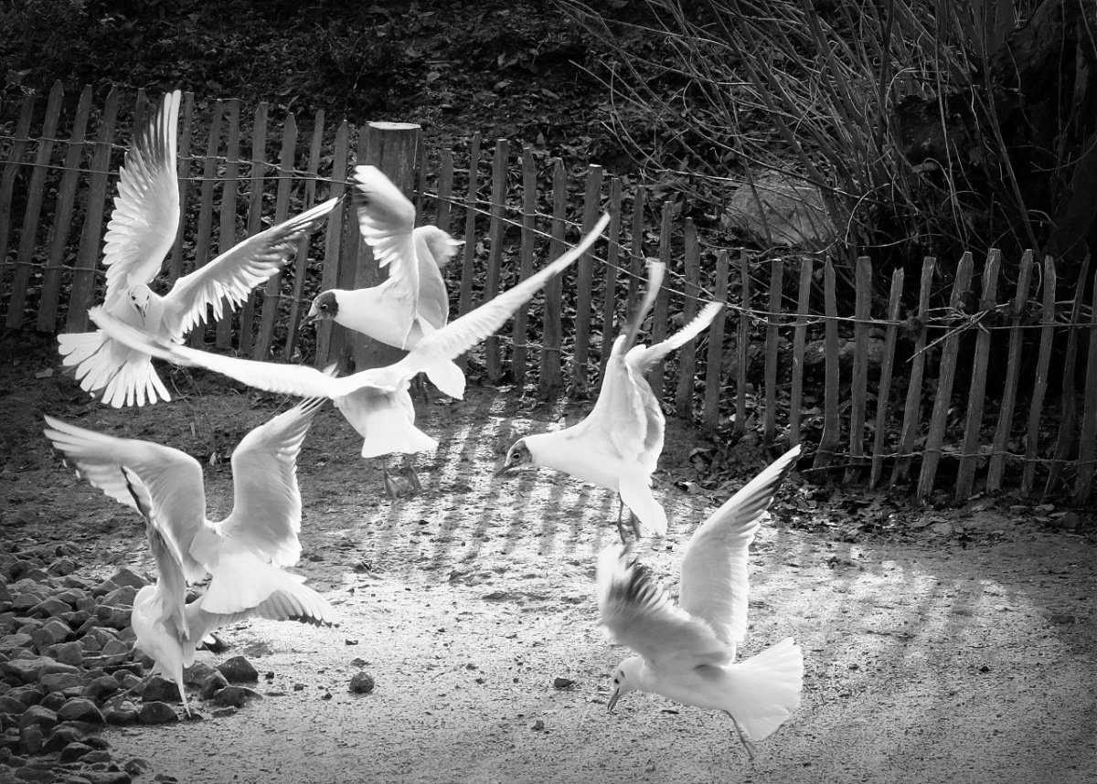 Zoo.07.jpg