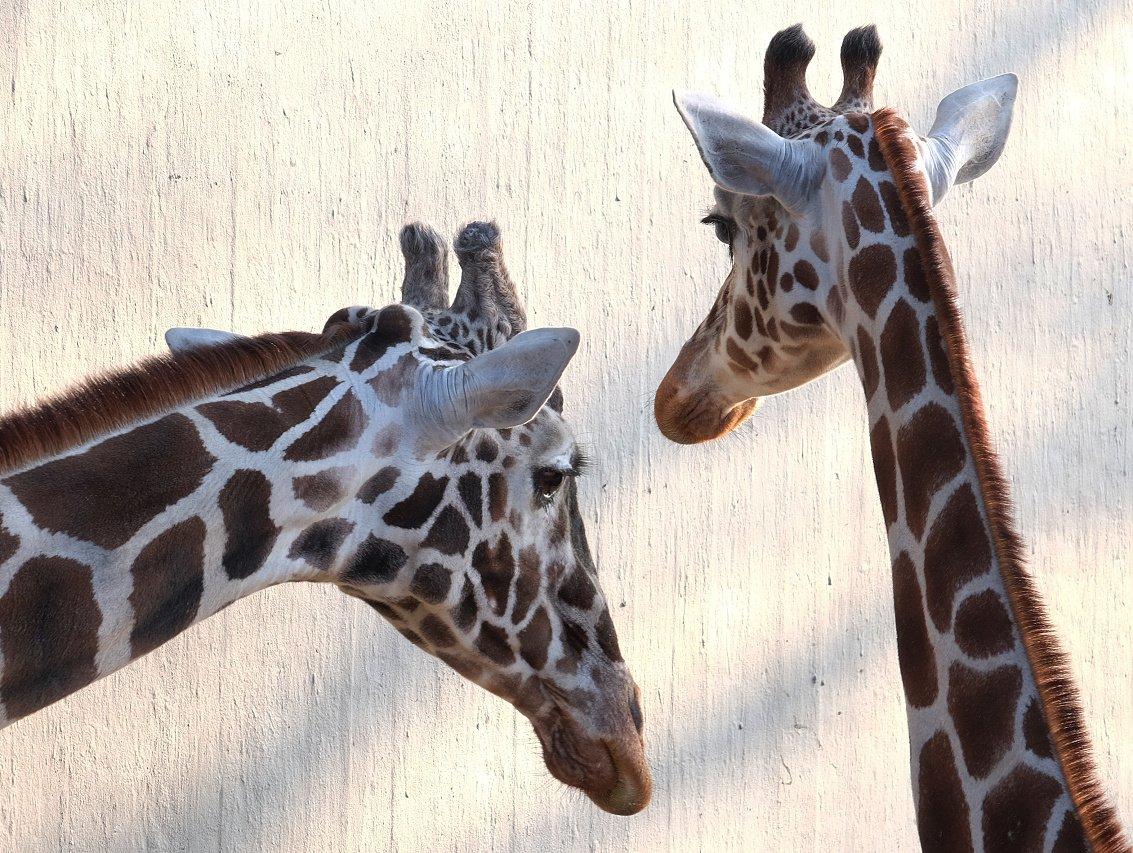 Zoo.16.jpg