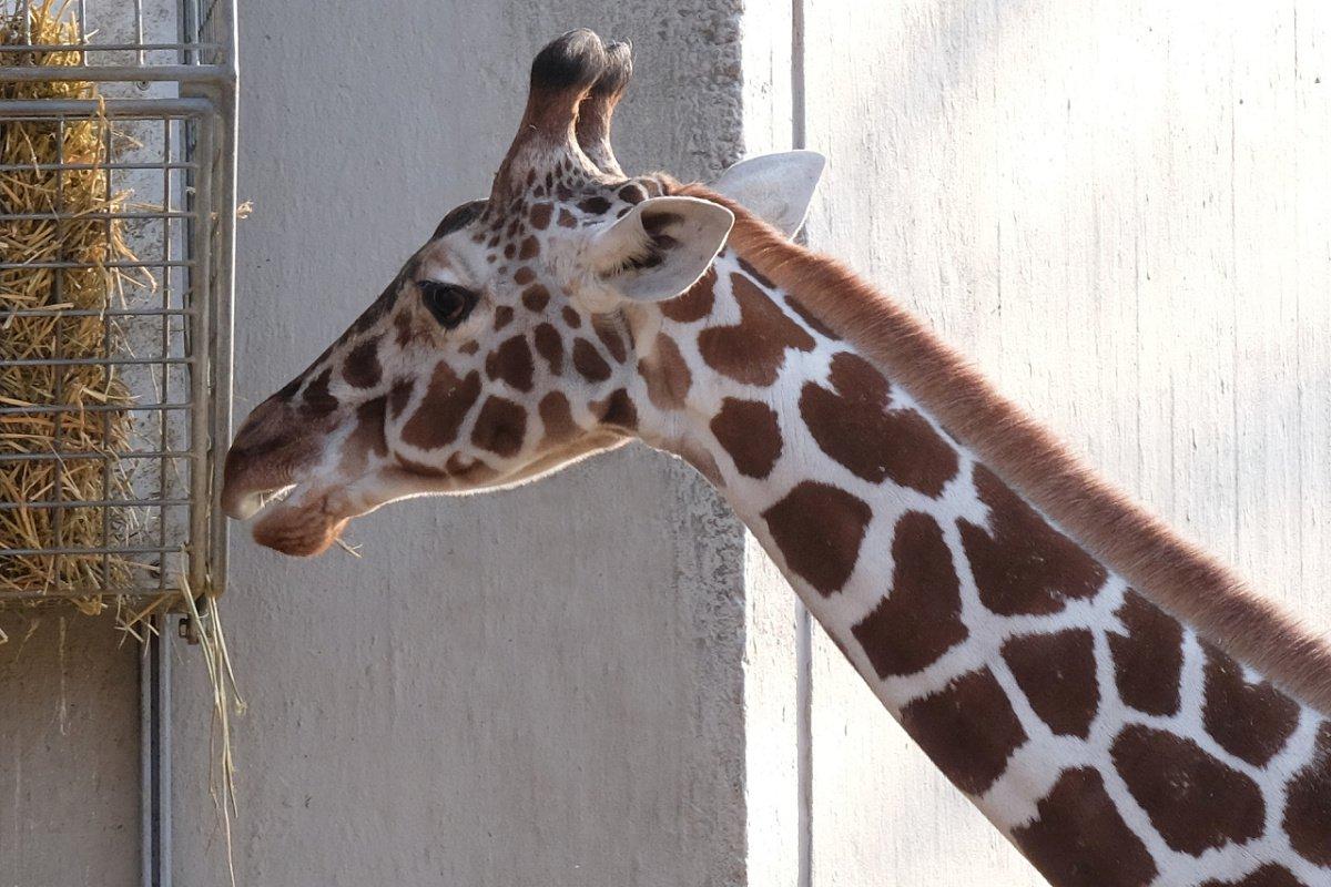 Zoo.17.jpg